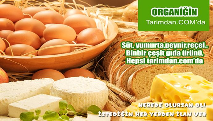 Başkan Mehmet Çerçi Organik Tarım Çalışmalarıyla İlgili Çalışmaları İnceledi