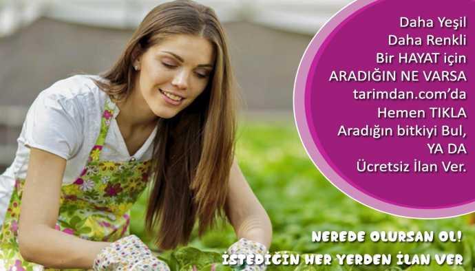 Bitki Yetiştiricilerinin Verimliliğini Artırmayı Amaçlayan Yeni Program Hazırlandı