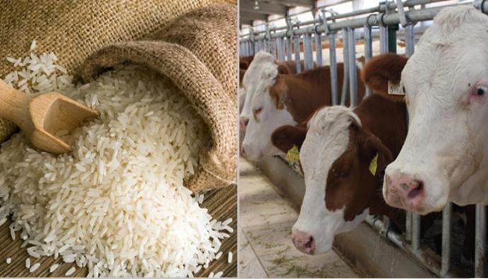 Hayvancılıkta destekleme artışı yok, bakliyatta yüzde 100 var