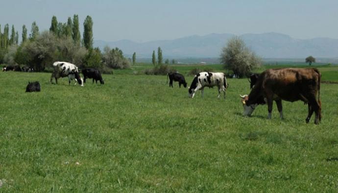 Hayvancılıkta 273 birlik 2 milyon çiftçi zord