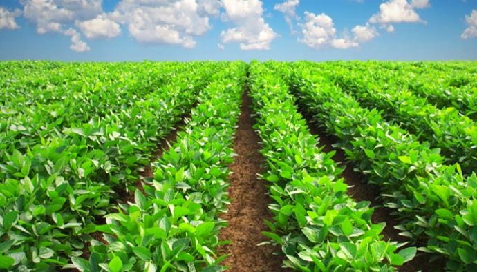 İyi Tarım Uygulamaları'na Destekleme Müracaatları Başladı