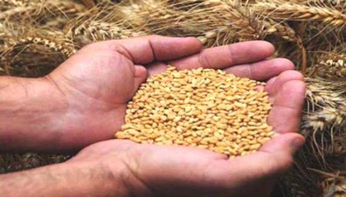 Köyüne Tesis Kurdu, Avrupa'ya Tohum İhraç Ediyor