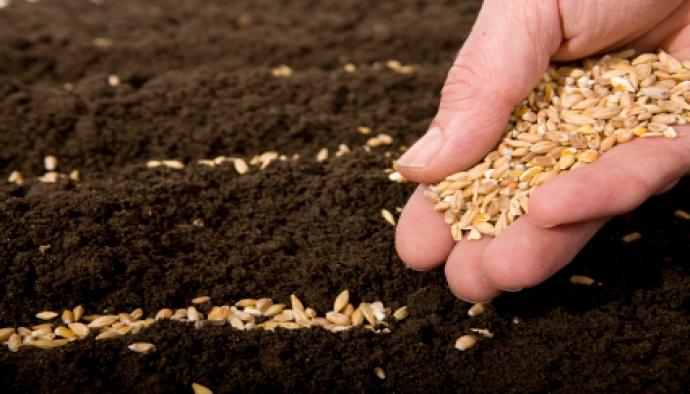 Tohumculuk sektörü Ar-Ge teşvikleri