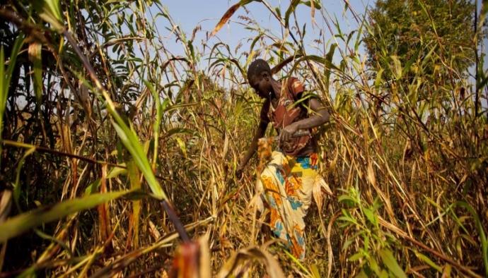 Türkiye, Sudan'da pilot çiftlikler kuracak