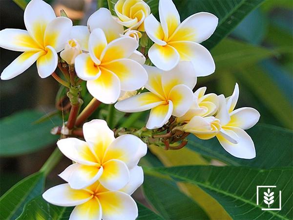 Çiçek Tohumu (1-Paket)