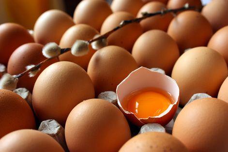 Çiftlik\'ten organik yumurta