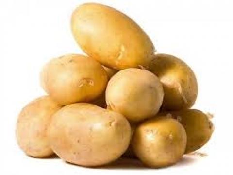 Satılık Agria cinsi patates tohumu