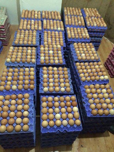 Her Cinsten Tavuk Yumurtası TOPTAN PERAKENDE SATIŞ