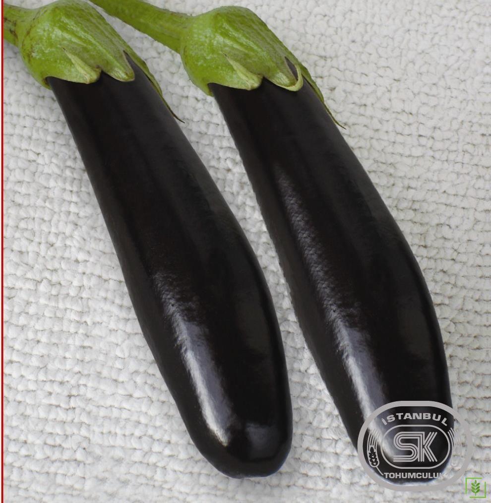 Patlıcan Tohumu Pala 49 10 gr
