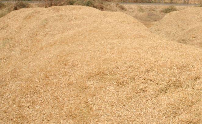 Taneli Buğday Saman Biçer Arkası Patoz Samanı