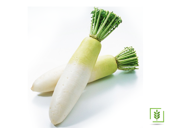 Uzun Beyaz Turp Tohumu (1-Paket)