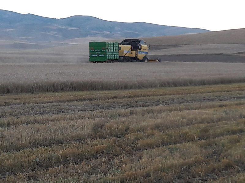Yüzlerce Ton Buğday ve Arpa Samanı (BİÇER DÖVER SAMANI)