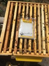 degracide 65 varroa ilacı