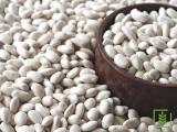 erzincan dermason kuru fasulye organik kg 19 tl üreticiden direk satış
