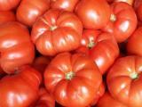 Geleneksel satılık domates tohumu