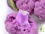 Karnabahar -Violet Tohumu (1-Paket)