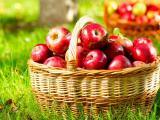 Mersin Gülnar'dan 300 Ton Satılık Kırmızı Elma
