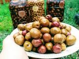 Organik Zeytin Ürünleri