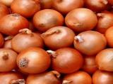 Sahibinden 55 ton Merzifon Banko 1 Kışlık Soğan