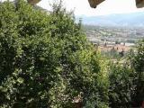 sakarya geyve alifuatpaşa da 268m2 arsa içinde 2 katlı ev