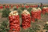 satılık soğan pan88